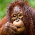 Borneo's Rainforest and Well-Preserved Paradise Islands