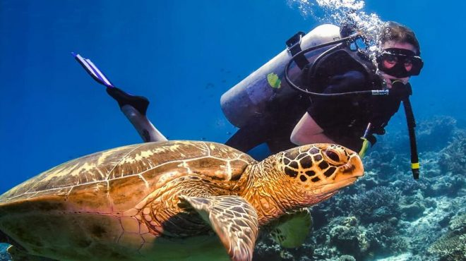 Jungle Experiences and World-Class Diving Holidays in Maylasia