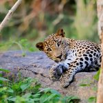 Mountains, Leopards and Beautiful Beaches