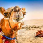 Travel to United Arab Emirates